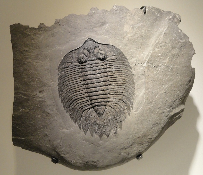 Rock-n-Fossil Day is Saturday morning at USU Geology Museum