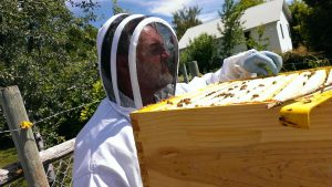 Beekeeping can be a learning and profitable experience